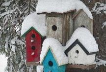 Bird Houses / by Debbie Beals