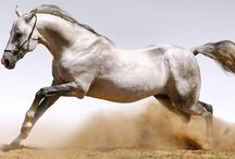 nature - horse