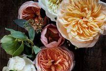 Flower Power / by Missy Fine Inc