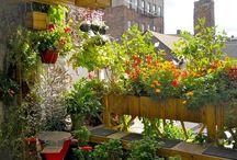 Gardens / by Nancy Dearr