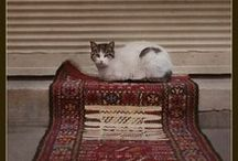 Cats & Rugs