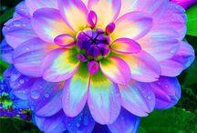 Outside -- garden vegetables flowers / Beautiful ideas  / by Linda Casey