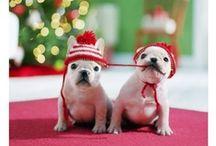 That holiday spirit