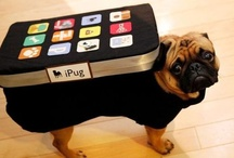 Animal Time!! / For the love of pugs
