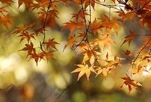 Autumn / Fall / by Virpi Janhunen