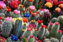 ARIZONA / Beautiful Arizona--a state everyone should explore. / by Jane Drake Hale