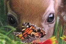 BUTTERFLIES BEAUTY / A butterflies spirit captured in a fleeting photo / by Jane Drake Hale