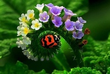 """LADYBUG / """"Not All Lady-Bug's Fly"""" A Farmer's favorite insect, and over 500 varieties. / by Jane Drake Hale"""
