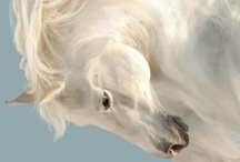 EQUINE ELEGANCE / The life and character of the horse.  / by Jane Drake Hale