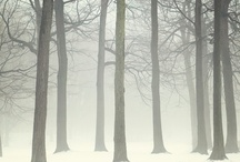 Winter / by Virpi Janhunen