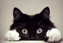 Cute cats / by Virpi Janhunen