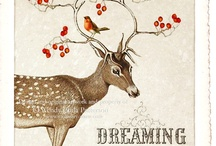 Deer / by Virpi Janhunen