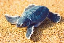 z o o [mania] / animals are so beautiful. I really L O V E turtles the most though!!!! / by Shannon Nichole