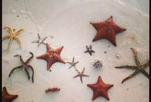 STARFISH / Starfish in global oceans. A few of my photographs @janedrakehale / by Jane Drake Hale