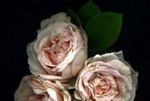 buds of mine / buds flowers + blossoms gorgeousity mine mine mine / by Sarah