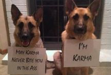 Just for fun / Fun, laughter, cuteness, and sarcasm. / by Trina Rimmer