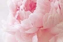 Flowers / by Pat Hamilton