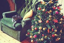 Holidays / It's the most wonderful time of the year / by Kathleen Mayko