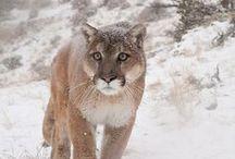 wild animals / by Phoebe West