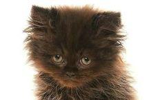 Kute Kittens and Kats