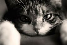 Kitttty, / I like cats. / by Ally