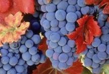 Growing Grapes & Making Wine