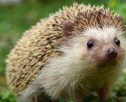 Ježkovia / Sú na nej veľký aj malý ježkovia