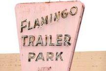 Flamingo / by Dallas Curow
