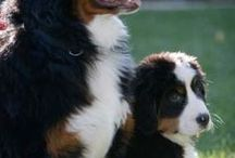 PUPS / by Christina Ringstrom