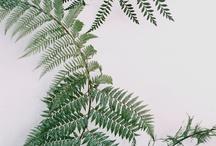 greengreengrass