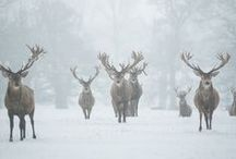 Walking I'm a winter wonderland