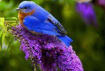 Butterflies and Bluebirds / by Angela Goodwin