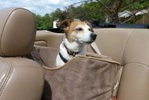 Snoozer Lookout Dog Car Seats / Whether you're riding around town, or around the country, let your dog enjoy the ride, sitting up smart in safety and comfort. Your best friend will enjoy the view in any one of a variety of Lookout or dog car seats from Snoozer.