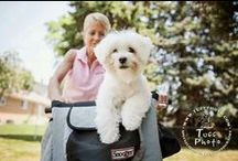Snoozer Bicycle Seats / Why should humans have all the fun? - Snoozer Bicycle Seats and Baskets - http://snoozerpetproducts.com/dog-beds-carriers/pet-auto-travel-c-26/exercise-pet-pleasure-c-26_36/