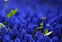 My favorite color blue / by Joanne Thomas