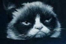 Grumpy Cat / Gotta love the Grumpy! / by Venus Cole