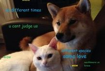 Doge / Wow. Doge. Such love.  / by Venus Cole
