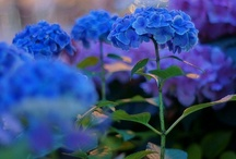 Blue~Is My Favorite Color / Everything Blue / by Wanda Crossley  Matthews House & Garden