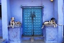 Doors / by Chrissy Nowak
