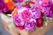 Flowers / by Chrissy Nowak