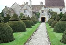 Boxwood / by Wanda Crossley  Matthews House & Garden