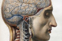 Anatomy and Medical Art / by Libby Carlson