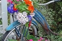 my garden / by Dawn Blankenship