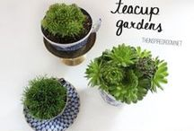 Cute Kitchen Things / by Goodness Direct