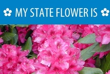 ✿ Hometalk State Flowers ✿ / Love gardening & the outdoors? Here's a little history and education on your state flower! What's yours? Find it here and repin to show your state pride.