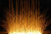 Garden at Night / The Illuminated Garden #gardens & #lights | #outdoor lighting