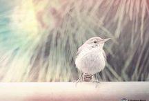 Birds of San Diego