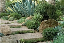 Home | Front yard ideas