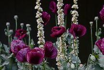 Dark Plants, Grey/Black/White Garden / And beautiful dark plant combinations