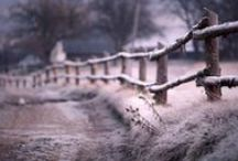 Winter mist & sugarfrost / The beauty of winter landscapes